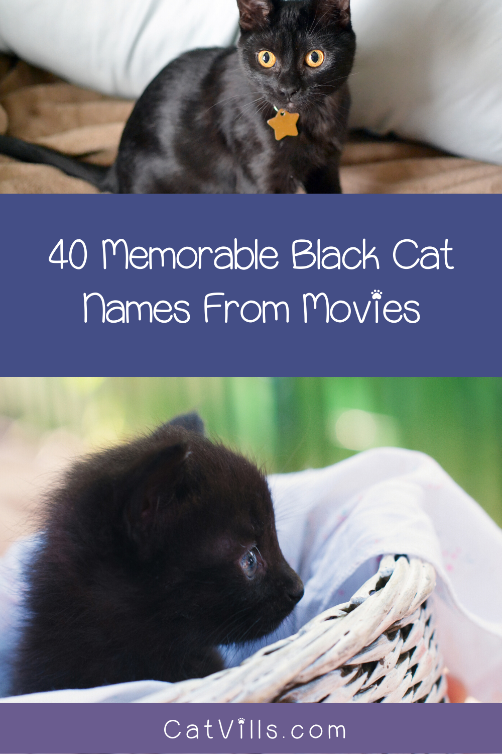 40 Memorable Black Cat Names From Movies CatVills in
