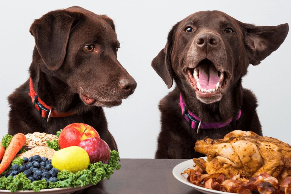 Pin on Dog Health & Wellness