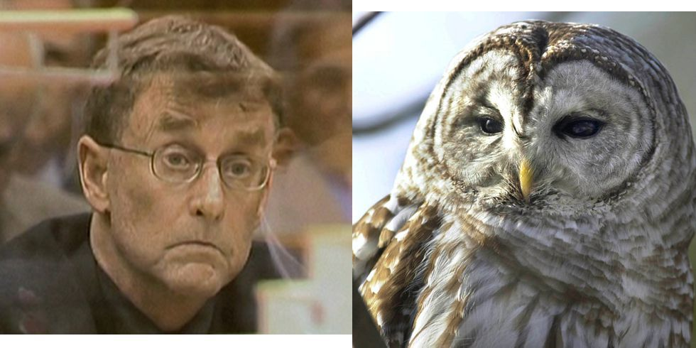 The Owl Theory Will Change How You Watch Netflix True Crime Doc