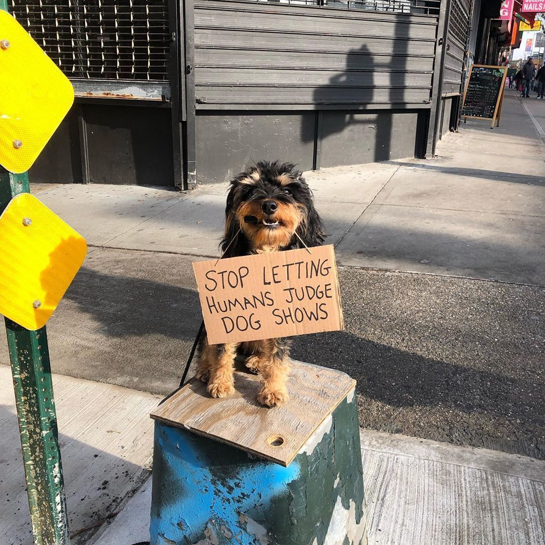 Dog With Sign Parodies Dude With Sign By A Wearing Cardboard