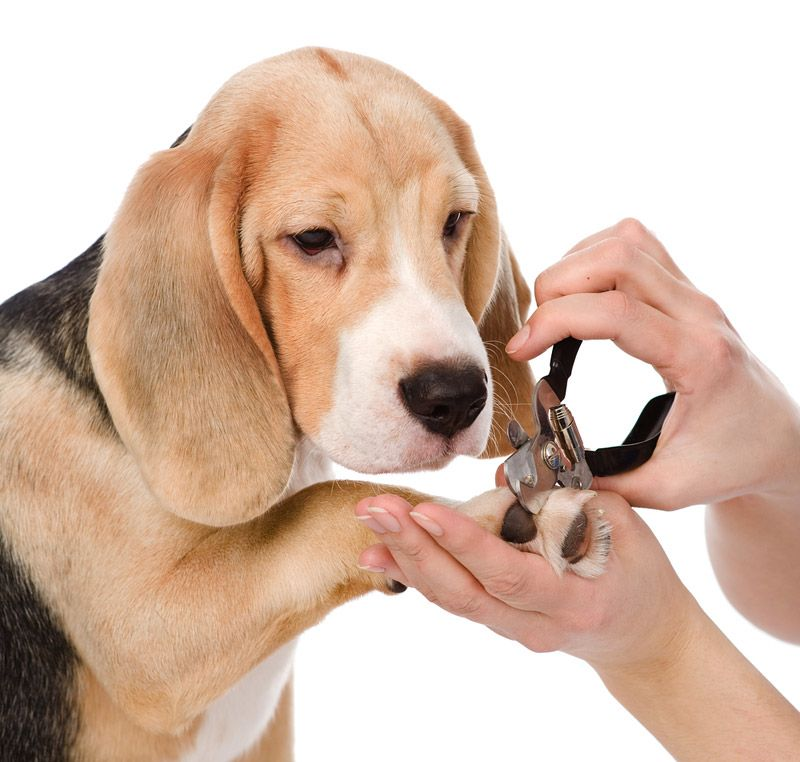 Dog Grooming How To Groom Your Dog At Home Dog Grooming Dog