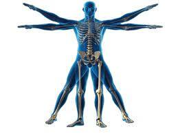 Resultado de imagem para antropometría