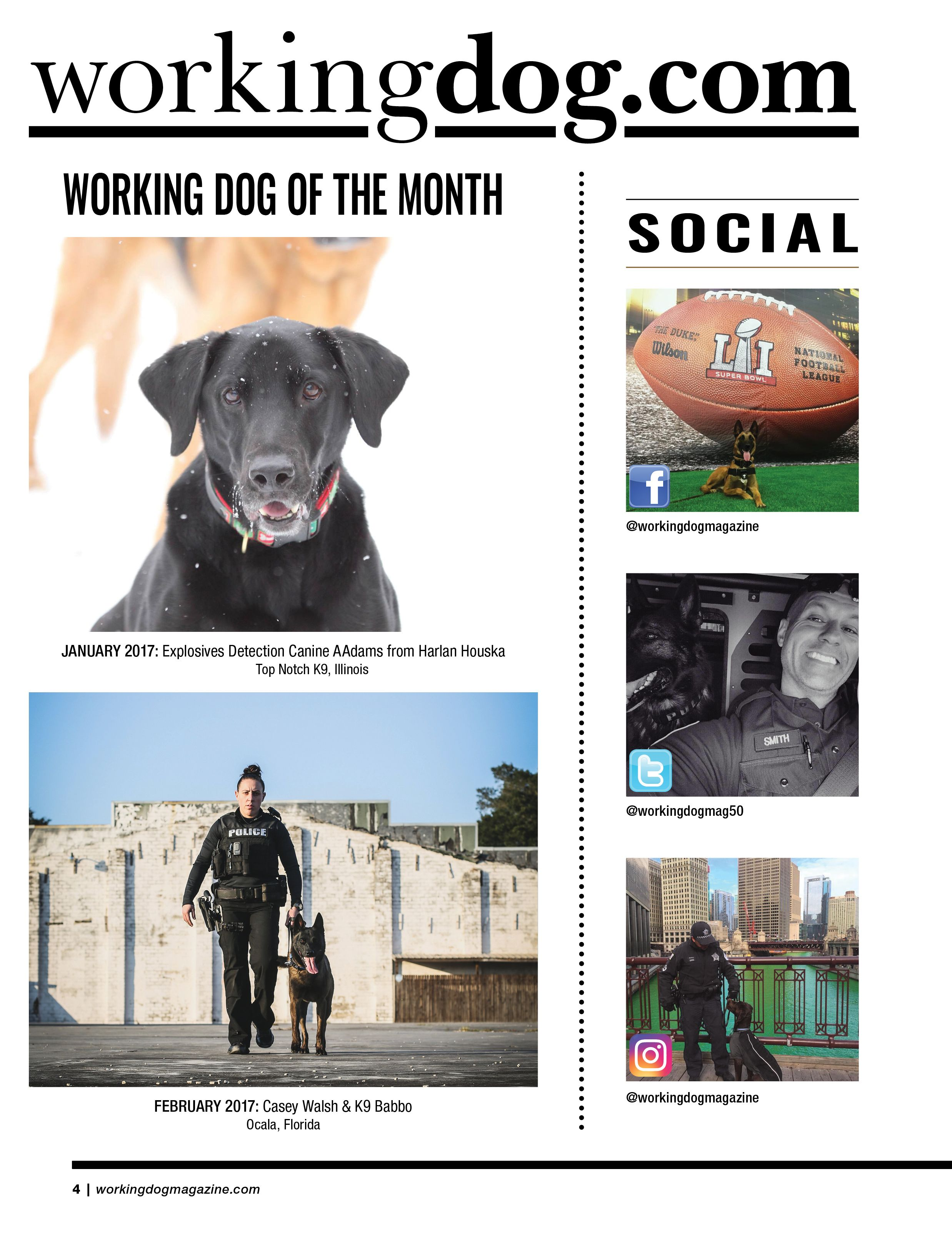 Issue 2 Working Dogs Military Working Dogs Service Dogs