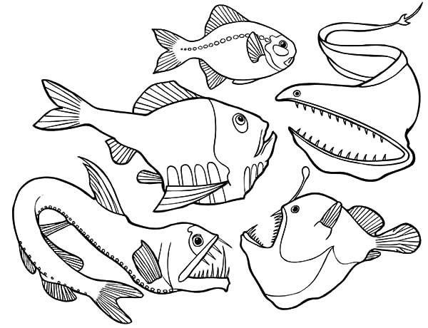 Dangerous Deep Sea Fish Angler Fish Coloring Pages Fish Coloring