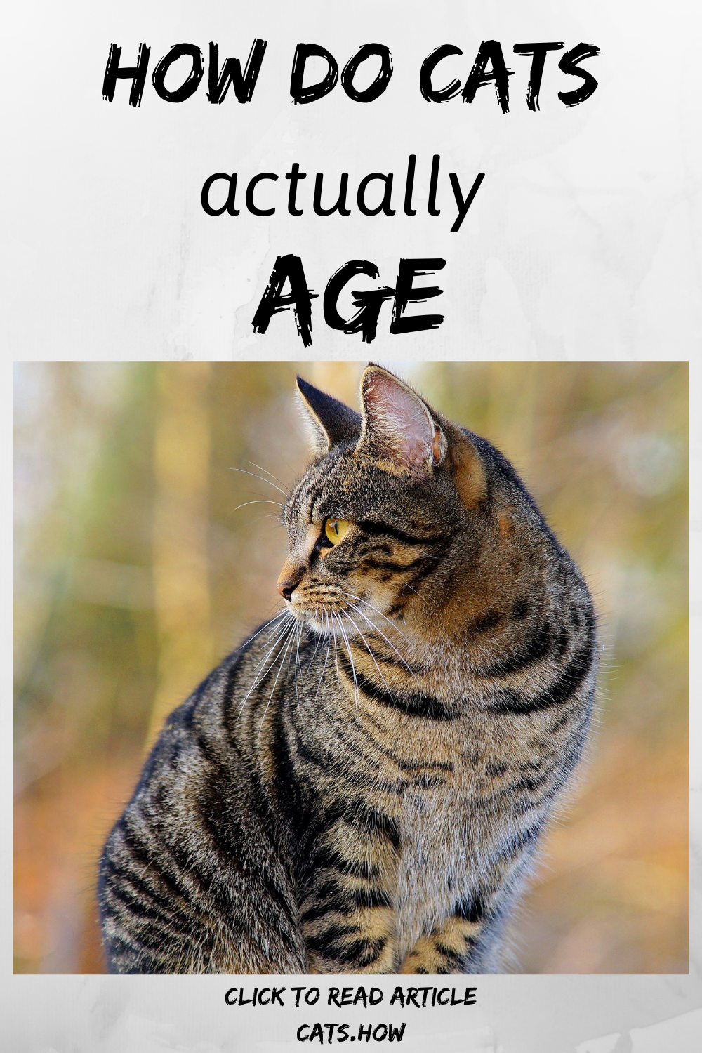 How Do Cats Age? in 2020 Cat ages, Cats, Cat facts