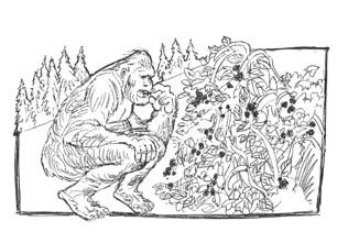 Sasquatch Coloring Pages Google Search Coloring Pages Color Female Sketch