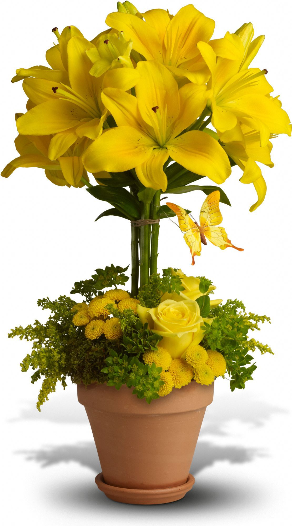 Yellow Fellow Flowers Yellow Fellow Flower Bouquet Teleflora