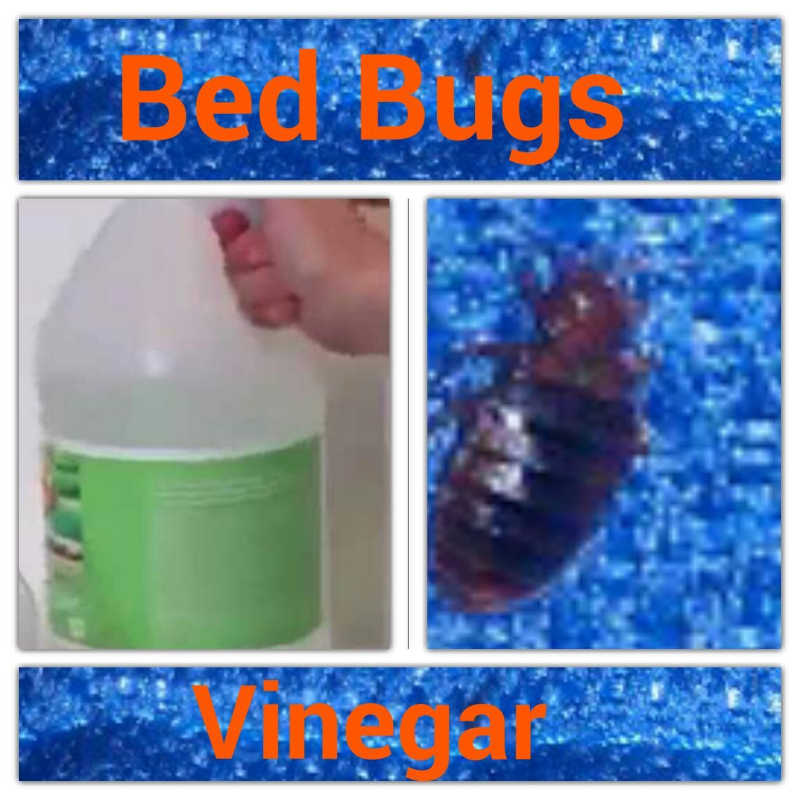 Pin on Bed Bugs products and info