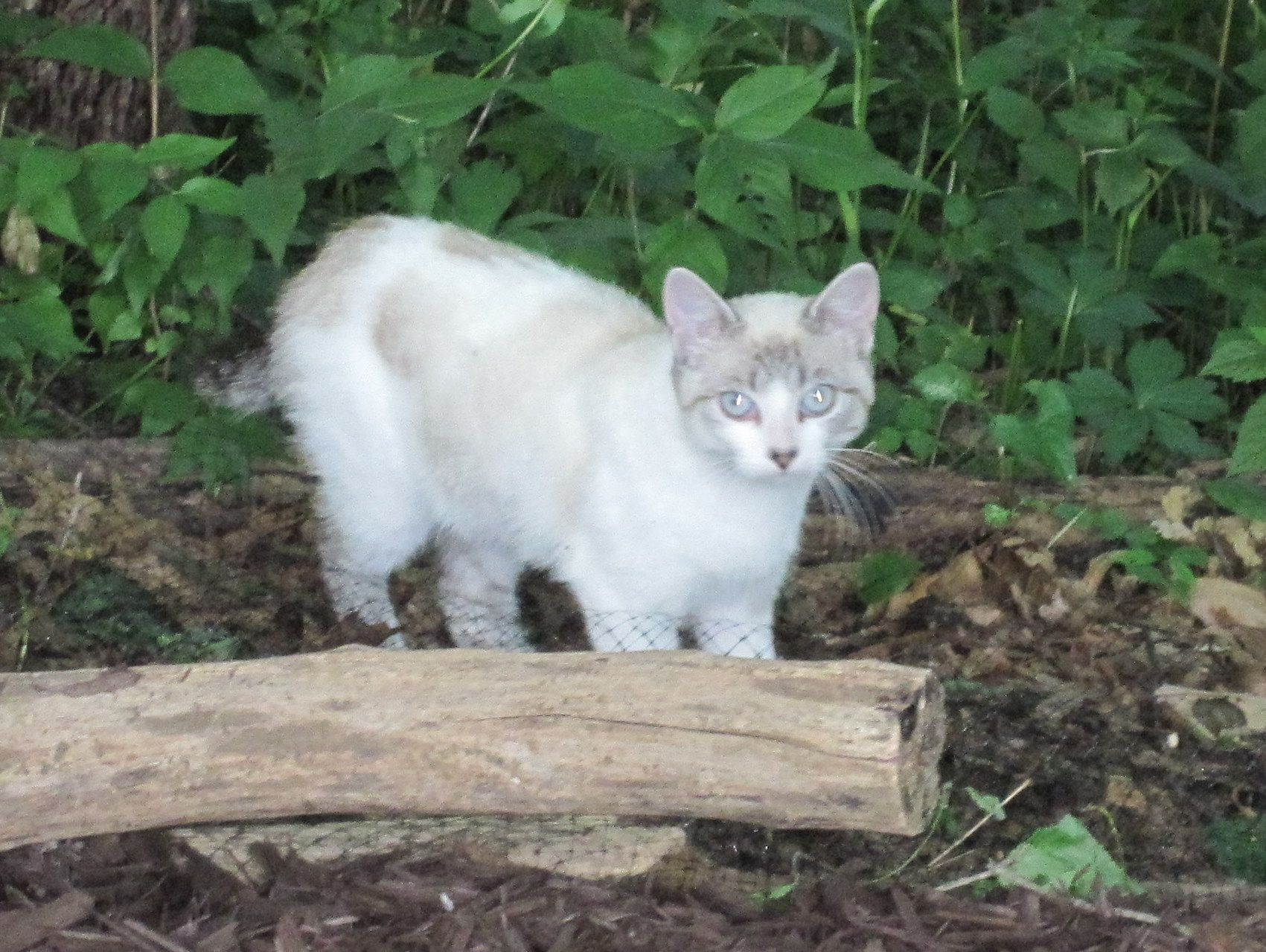 How to Tame a Wild Cat Cats, Feral cats, I love cats