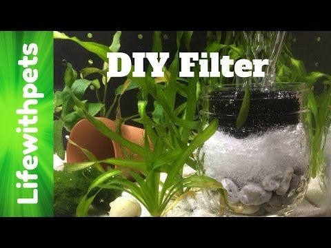 How To Make A Diy Sponge Filter For A Betta Fish Tank Youtube Betta Fish Tank Fish Tank Plants Betta Fish