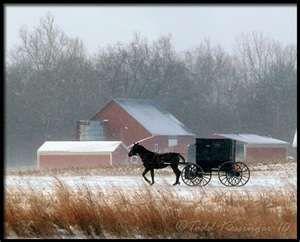 Amish Buggy 12.13.10