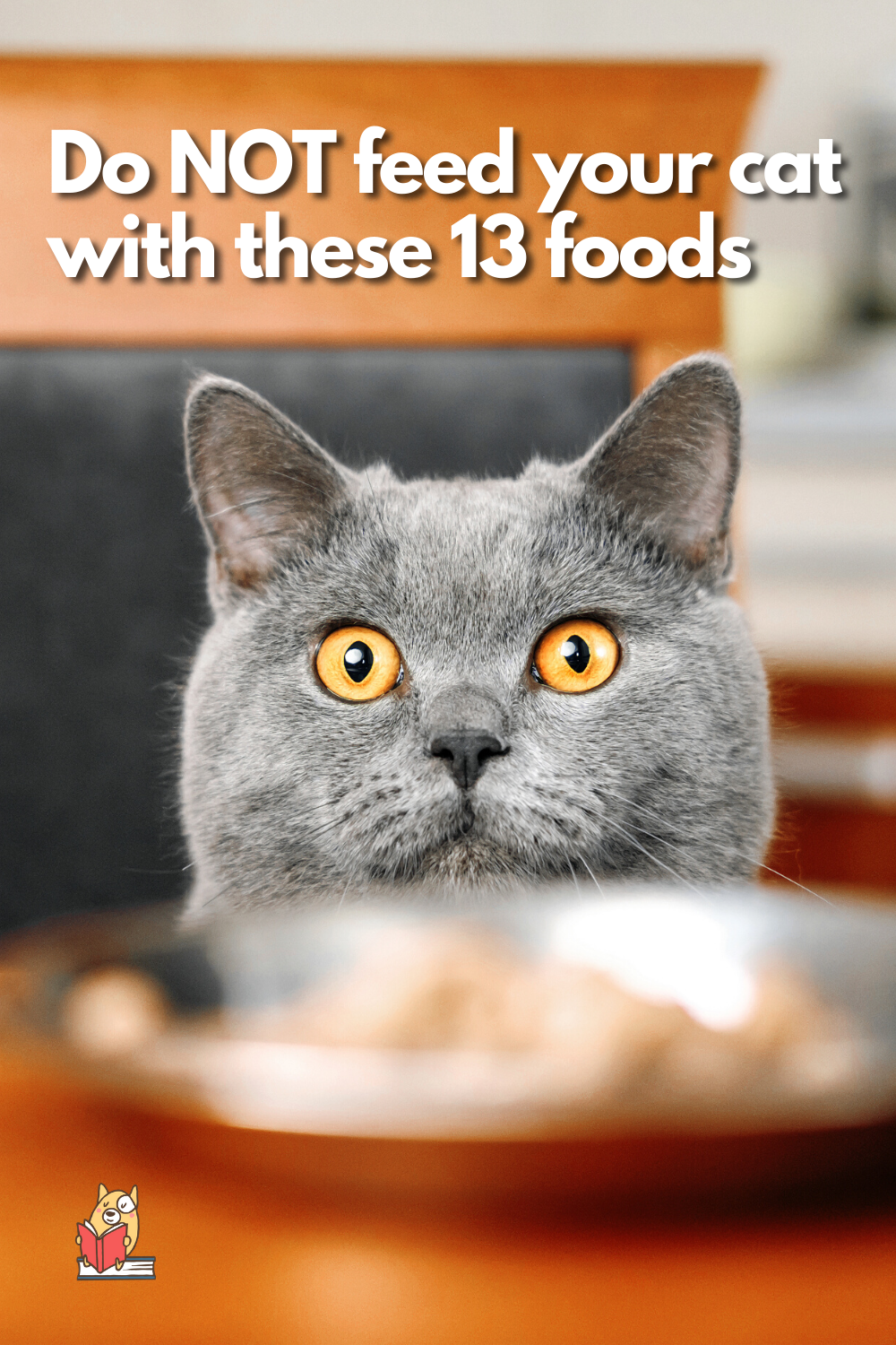 13 Toxic Foods For Cats In 2020 Kitten Care Cats Animal Books