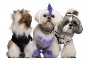 Mobile Dog Grooming Services in San Diego