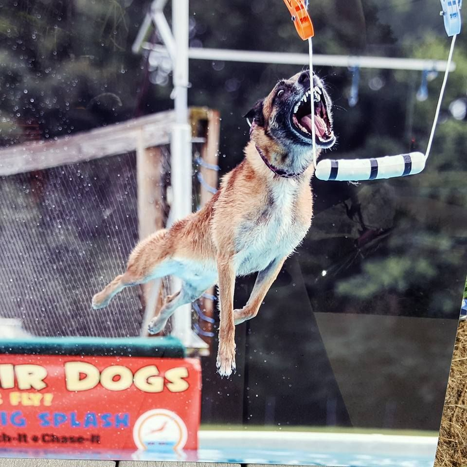 How To Train Your Dock Diving Dog Dogs Dog Training Training