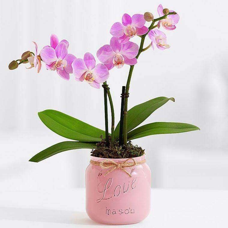 Plantas de interior con flor para decorar | Plantas con flores de ...