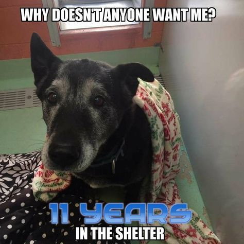 """In shelter 7 years! ●9•9•17 SL●Why doesn't anybody want me? A question a dog, homeless for a decade, must surely wonder. The dog, named """"Dodger,"""" has been at the North Fork Animal Welfare League, in Peconic, New York for 7 YEARS!"""