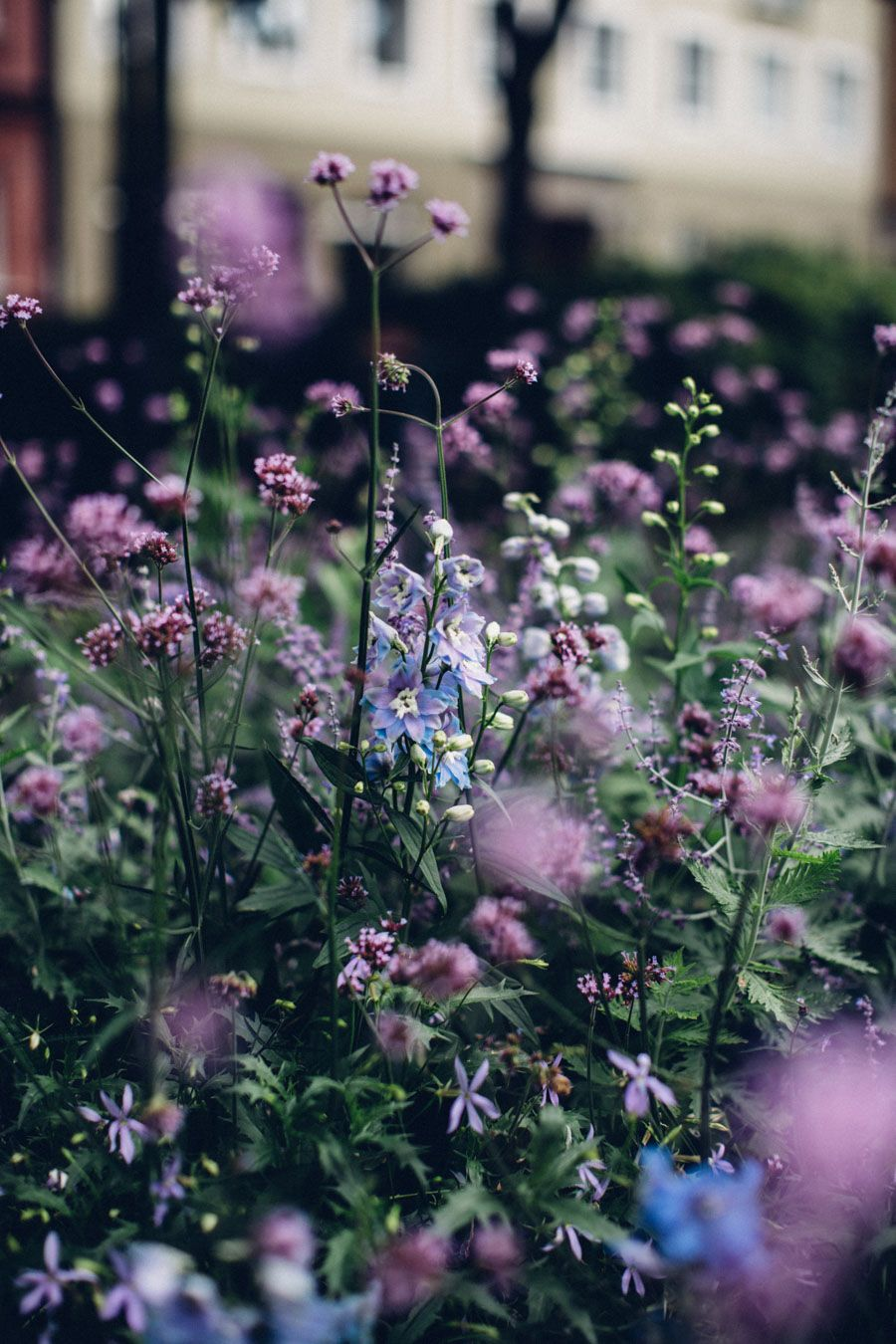 Pin by marcavage on flowers pinterest gardens flowers and plants