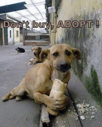 Breeders kill shelter dogs' chances..!!!