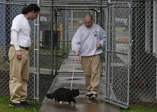 Cats In Prison With Images Obedience Training Dog Training