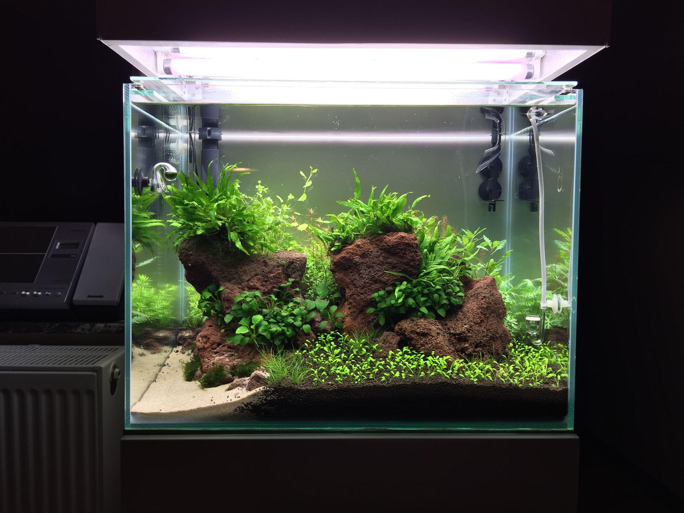 My Own Ada Inspired Nature Aquarium (Daan Arc Style  All