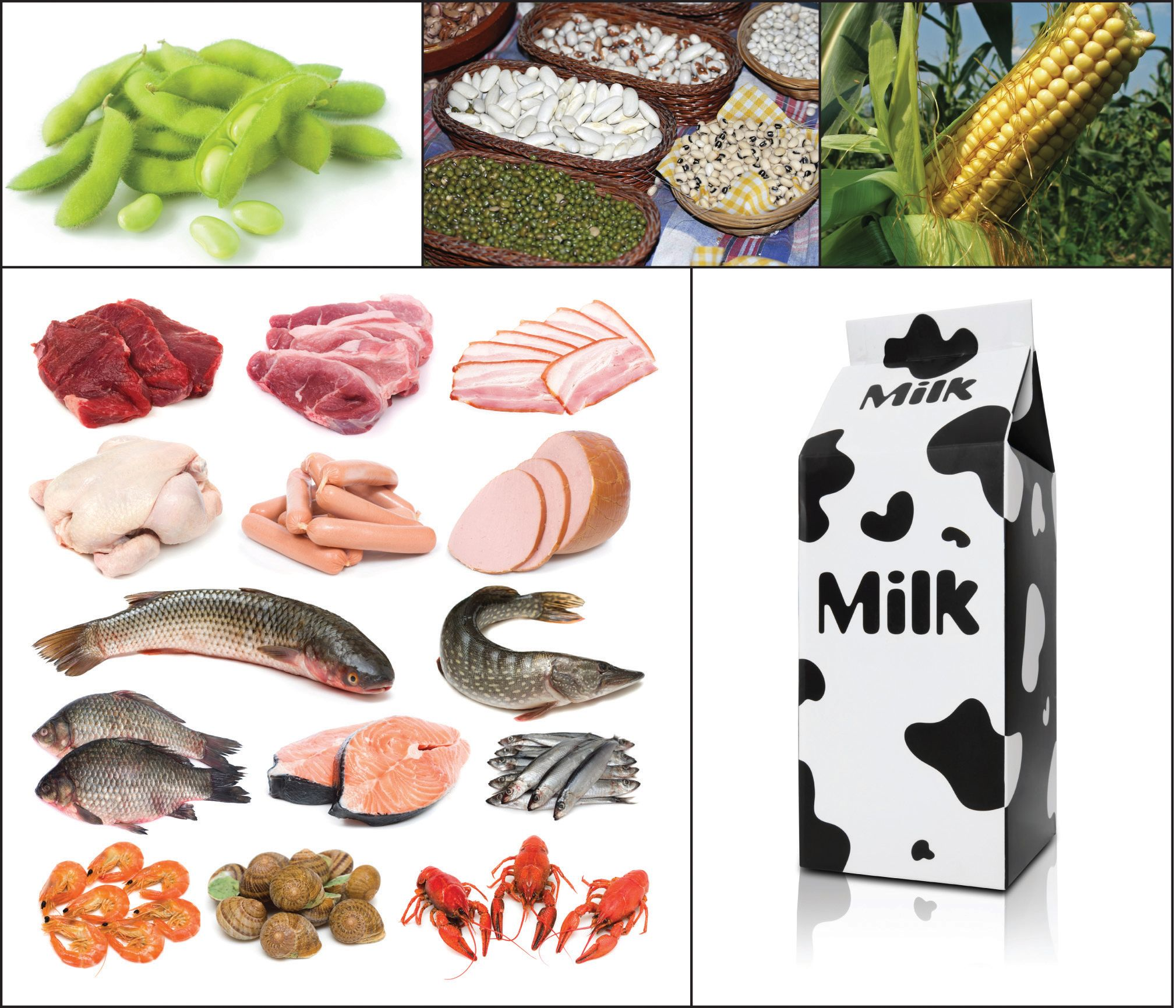 Proteins Where You See The Most Examples In Protein Is Food