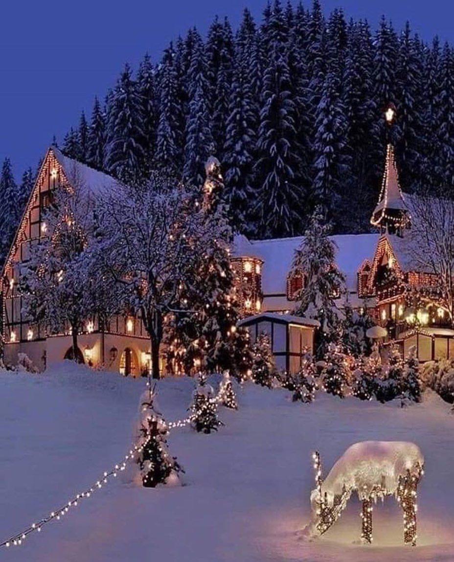 "Santa Claus on Instagram: ""Gorgeous ️�️�� . . . . . #september #christmastime #christmasmood #christmasvibes #christmaslove #christmaslights #lights #christmastree…"""