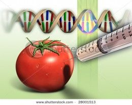 Advantages And Disadvantages Of Genetically Modified Food