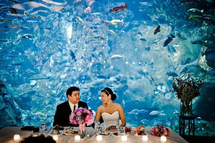 An Aquarium Wedding Aquarium Wedding Underwater Wedding Aquarium Wedding Reception