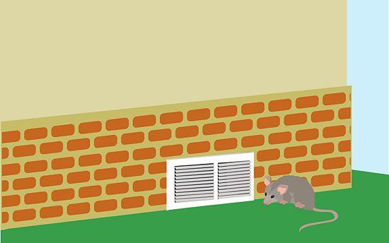 Get Rid of Possums | Pest control, Aggressive animals ...