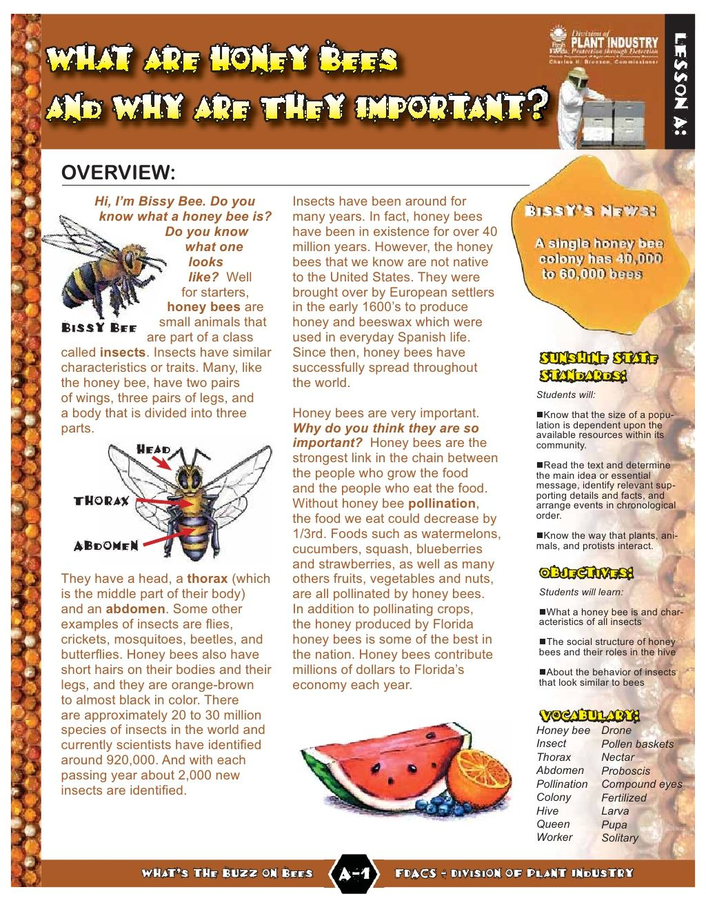 Buzz On Bees Lesson Plan