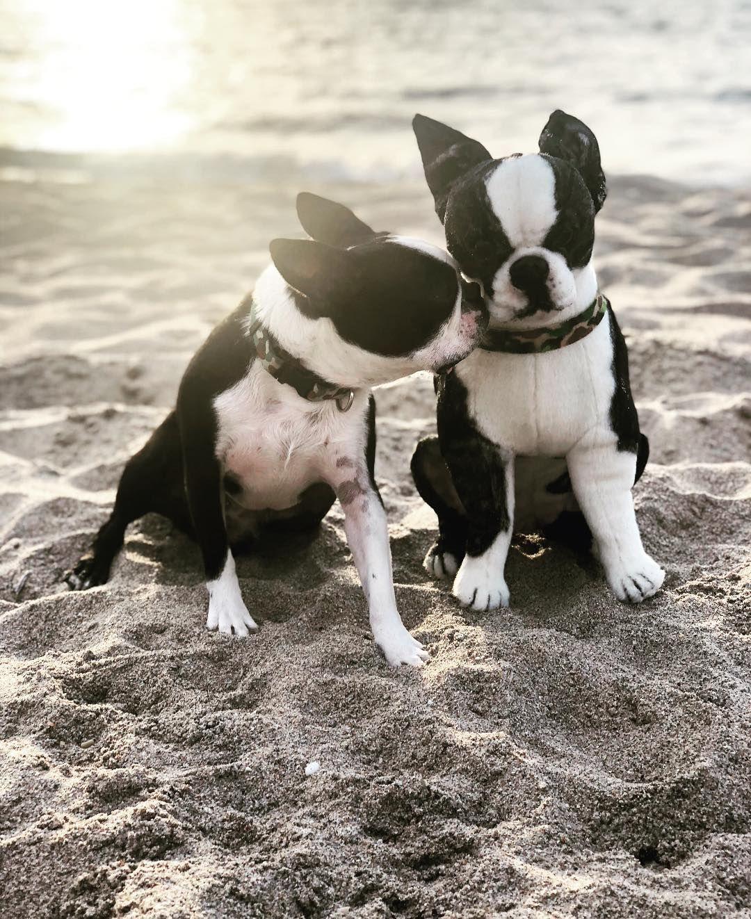 Stuffed Animal Of Your Pet Pet Plush Petsies Custom Stuffed Animal Boston Terrier Love Boston Terrier