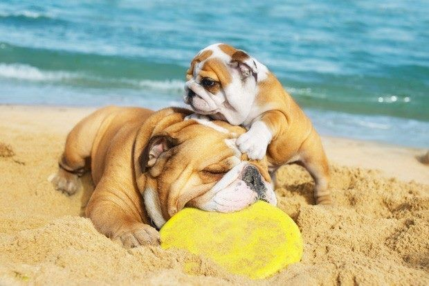Family Time At The Beach Priceless Familytime Bulldogs