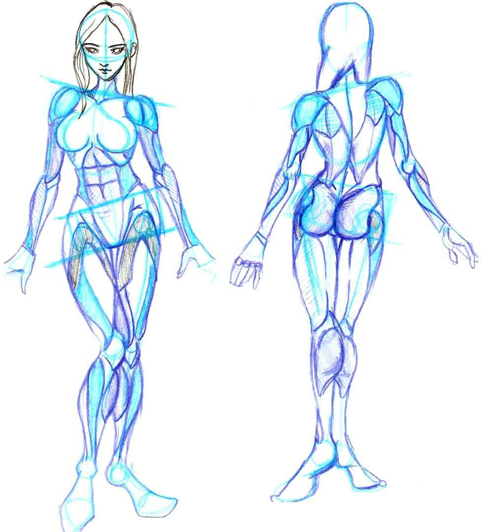 Just drew this female front and back reference with muscle groups ...