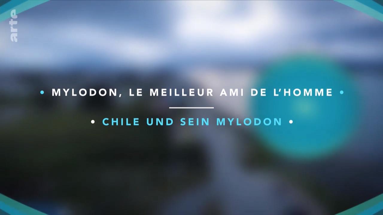 Lange vor dem Hund war vielleicht das Mylodon einmal der beste Freund des Menschen. Dieses Riesenfaultier lebte vor 10.000 Jahren im heutigen Patagonien. Das stattliche Tier wurde bis zu zweieinhalb Meter groß und zählte mit rund drei Tonnen zu den Schwergewichten. #chile #patagonien #patagonia #patagonie #animal #tier #history #geschichte
