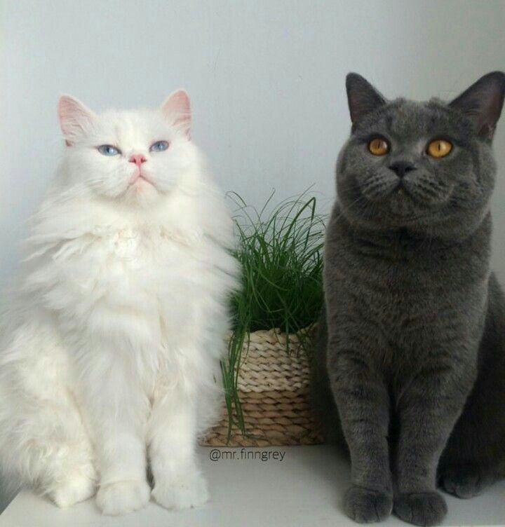 Radishrice Cute Animals Funny Animals Jellicle Cats
