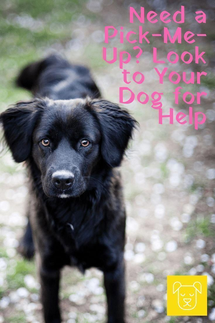 Obedience Training Refer To A Vast Array Of Skills And Methods Of