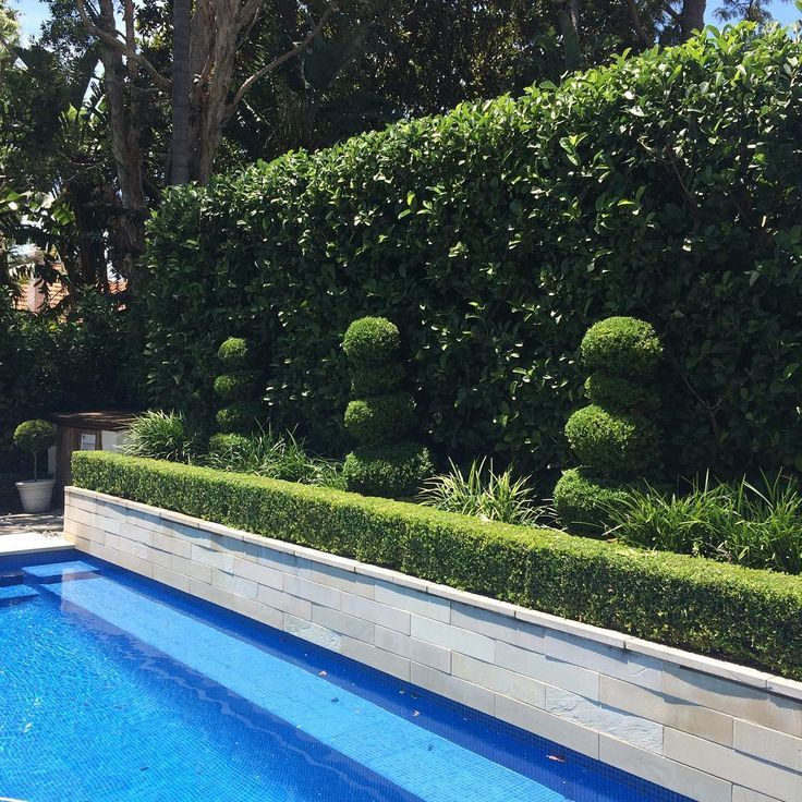 Traditional Garden With Pool: An Elegant Poolside Garden