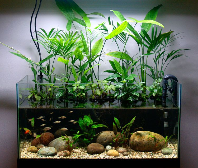 Riparium setup in a 50 gallon fish tank i should try a for 10 gallon fish tanks
