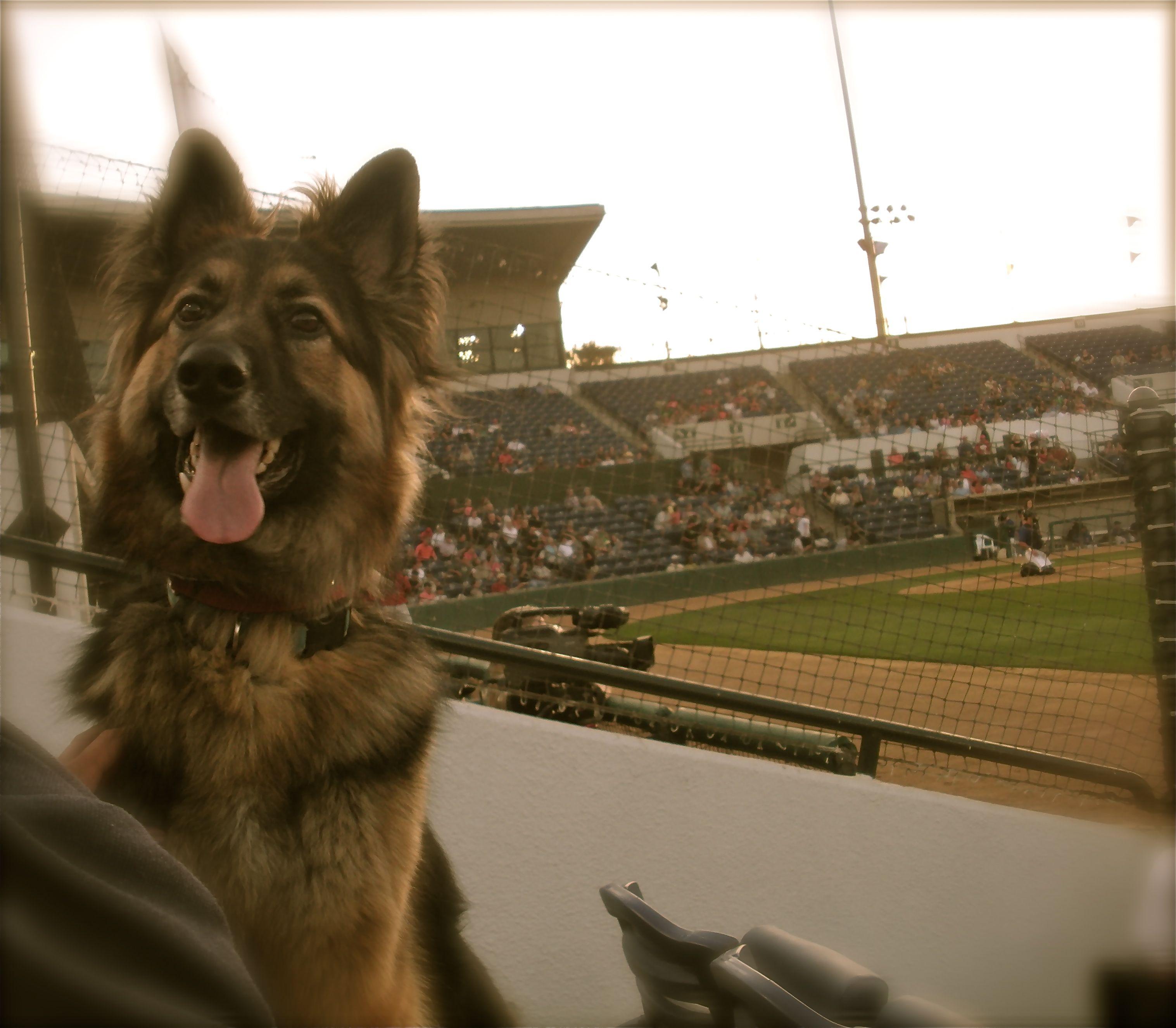 My dog Denver, he loves going to Bark in the Park. He