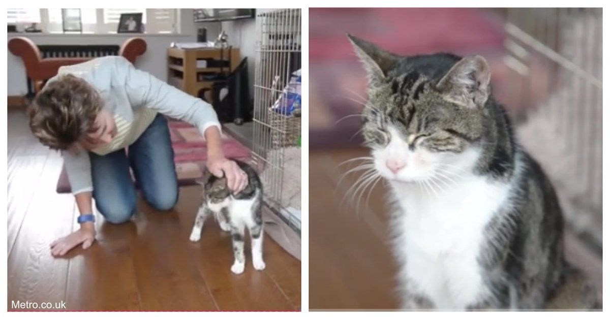 17YearOld Cat Lost In 2005 Miraculously Shows Up 13