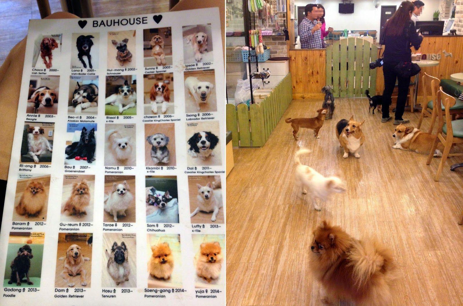 Bau House Dog Cafe Hongdae Seoul South Korea Dog Cafe Dog