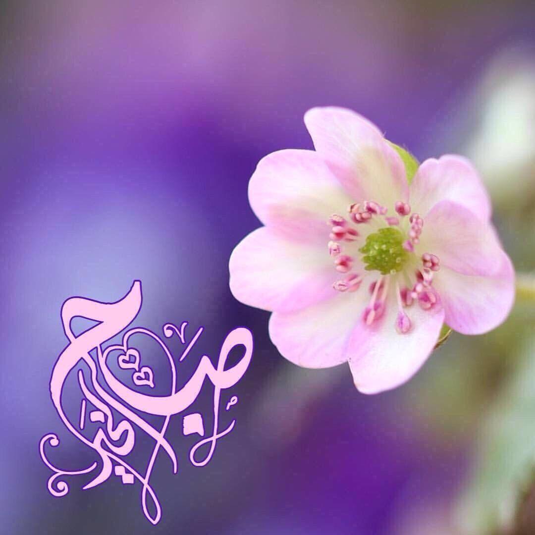 تصبيحة Good Morning Arabic Good Morning Greetings Beautiful Morning