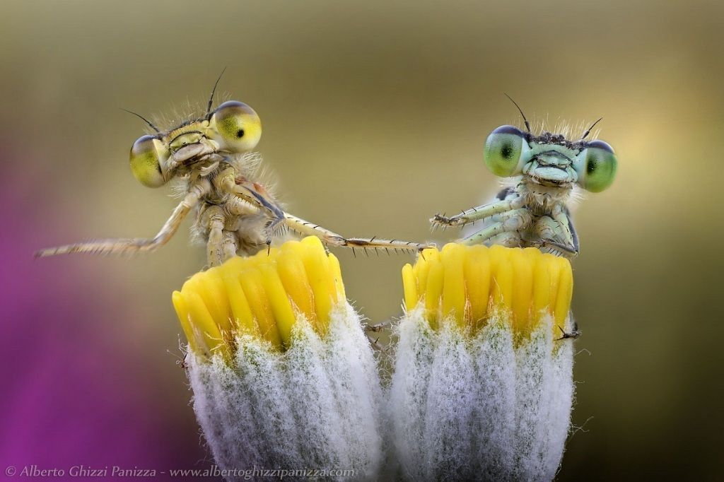 Top 10 Best Macro Photographers in the World - TopTeny Magazine