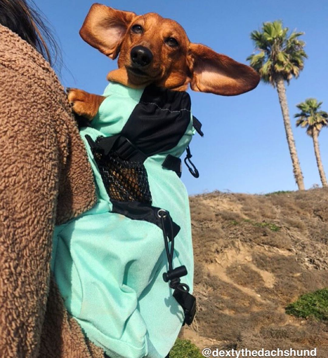 K9 Sport Sack Air Forward Facing Dog Carrier Backpack Free Shipping Chewy Dog Backpack Carrier Dog Carrier Dachshund Puppies For Sale