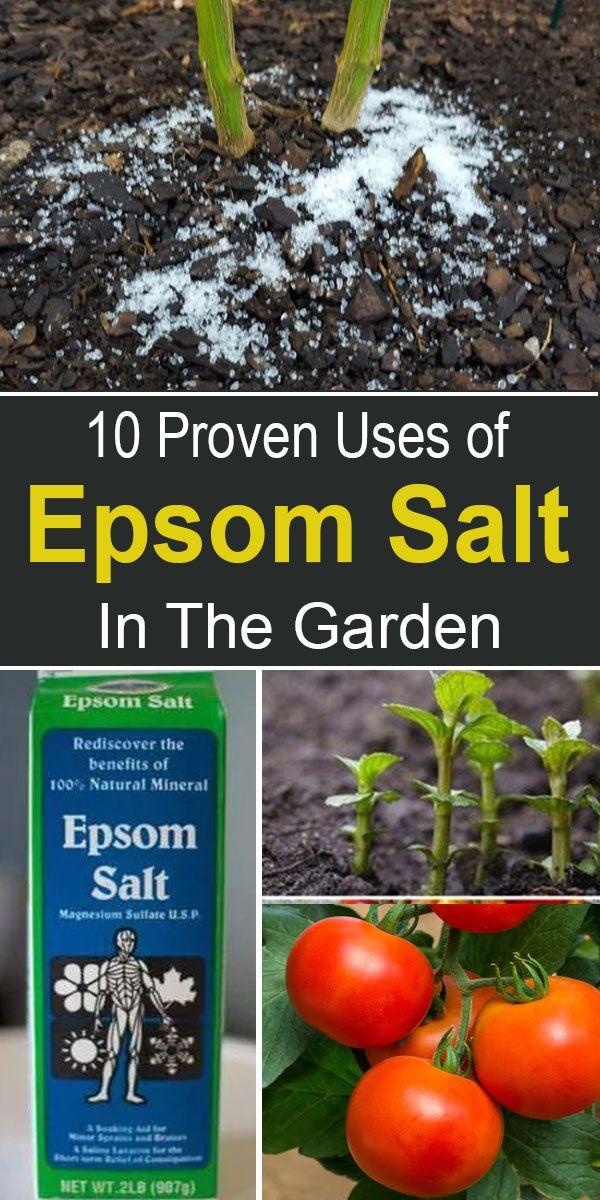 Epsom Salts In The Garden: 10 Proven Uses