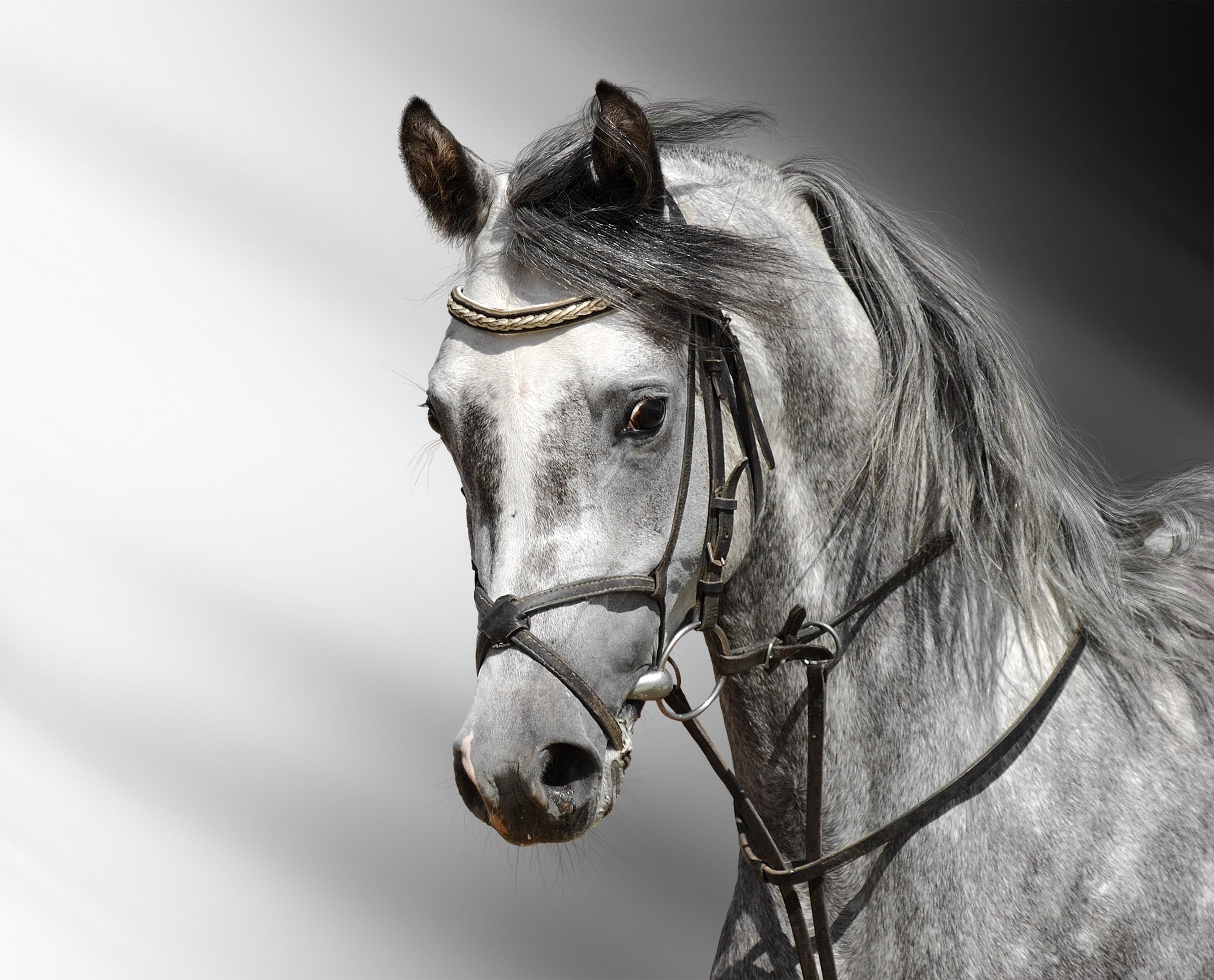 Beautiful Animal Photos That I Ve Collected Over The Years They Now Have Found A Home On Pinterest Yay Chevaux Gris Pommeles Animaux Photographie Equestre