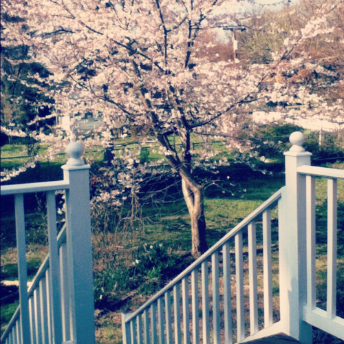 Cherry Blossoms must be somewhere.