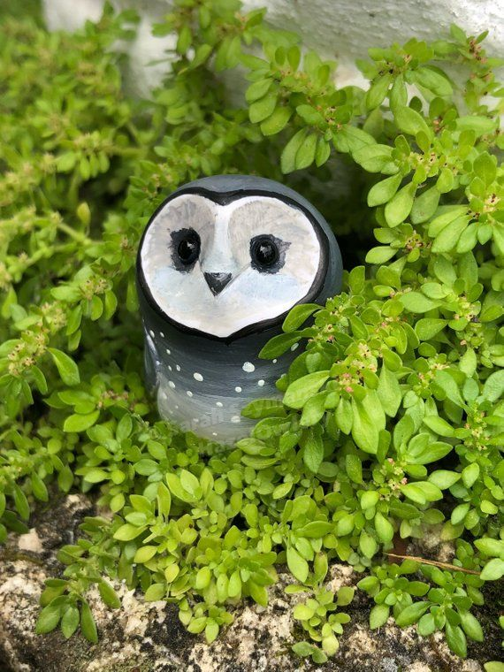 Sooty Owl - a color variation of Barn Owl | Harry potter ...