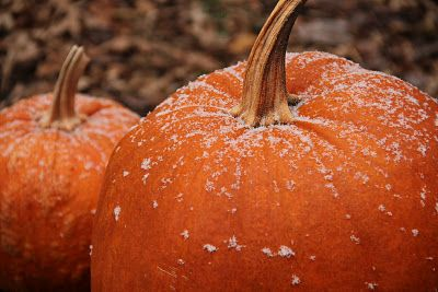 Frost is on the pumpkin | Pumpkin, Fall pumpkins, Fall harvest