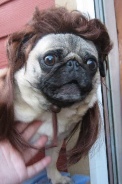 Pug Mullet Pugs Funny Pugs Pug Love